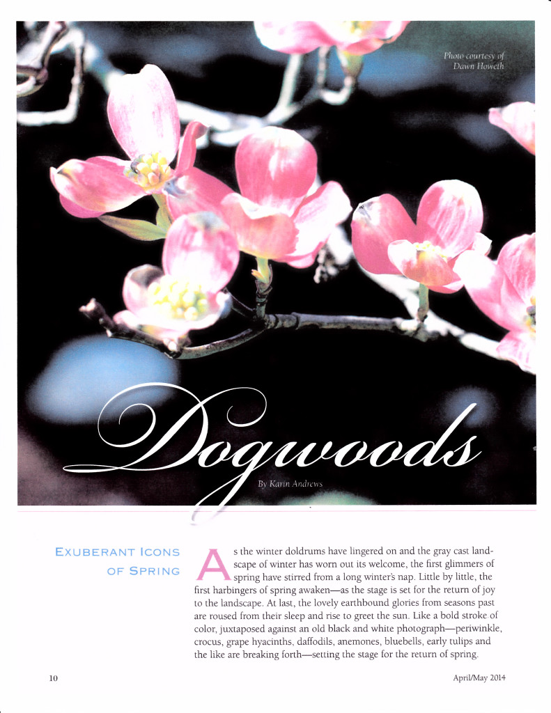dogwoods by Karin Andrews from House and Home 300 dpi_0002