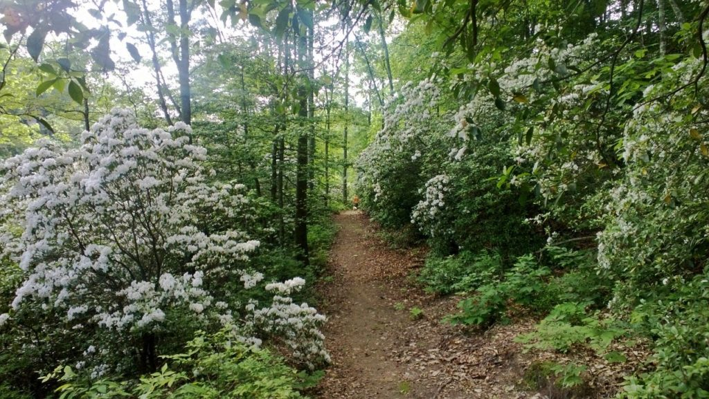 Underwood Trail flowering path